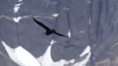 Condor flying in front of mountain 3 Stock Footage