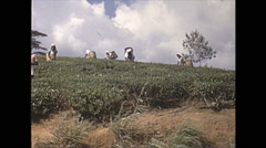 Vintage 16mm film, 1970, Ceylon, tea plantation labour picking 2 shot Stock Footage