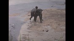 Vintage 16mm film, 1970, Ceylon, washing elephants #2 Stock Footage