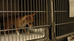 Little dog in a cage at the vets Stock Footage