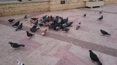Pigeons pick garbage in city street, dangerous disease carriers in public place Stock Footage