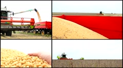 4K SOYA  Soybean field  ,harvesting soya multi screen collage 4K Stock Footage
