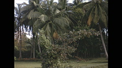 Vintage 16mm film, 1970, Ceylon, palm trees and lily pond Stock Footage