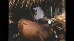 Vintage 16mm film, 1970, Ceylon, oxen convoy through village Stock Footage
