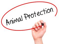 Man Hand writing Animal Protection with black marker on visual screen - stock illustration