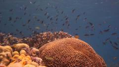 Coral Spin Pan of healthy coral reef with many fish - stock footage