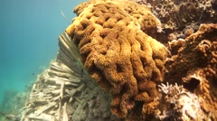 Half Healthy Damaged Coral in shallow water wide angle Stock Footage