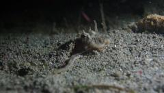 Octopus carefully navigating sand underwater movement - stock footage