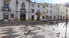 Tomar main square. Pigeons fly when car pass by - stock footage