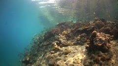 Clear water coral reef with large hard corals in wide angle Stock Footage