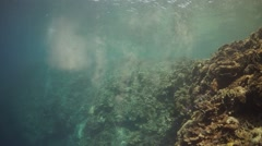 Parrotfish Poo lingers in clear water - Reef Herbivore excretion - stock footage