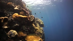 Wide Angle Pristine Coral Reef with sun shinning through - stock footage
