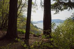The Columbia River through the forest Stock Photos