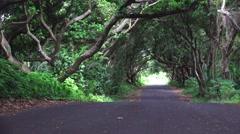 Trees in Hawaii, tilt up, Hawaii  Stock Footage