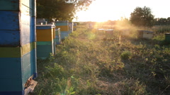 Beehive at sunset. Timelapse Stock Footage