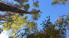 Bottom view to summer forest Stock Footage