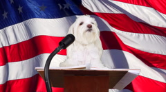 Adorable Defiant Proud Dog Referendum Satire - stock footage