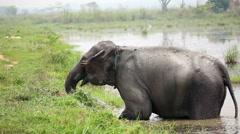 Elephant bathing in Nepal national park Stock Footage