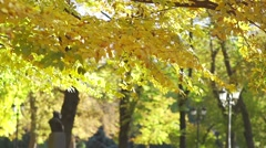 autumn leaves falling from yellowed trees in the park in slow motion - stock footage