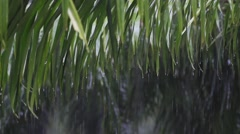 rainwater dripping from the leaves of trees. with sound - stock footage