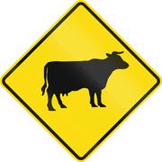 New Zealand road sign - Watch for cattle - stock illustration