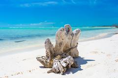 Snag on the tropical beach Stock Photos