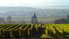 Champagne vineyards in the Montagne de Reims area of the Marne department near t Stock Footage