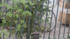 Pan up of a metal fence with foliage around it Stock Footage