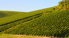 Champagne vineyards in the Cote des Bar area of the Aube department near to Les  Stock Footage