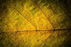 Autumn leaves. Texture of autumn leaves.. Background of leaves. Stock Photos