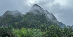 Khao Lak national park in Phang Nga Thailand. Humid climate of tropical forest - stock footage