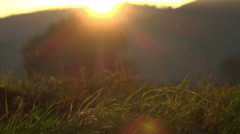 Sunset on the grass in countryside Stock Footage