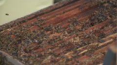 Smoking a beehive - stock footage