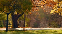 Falling autumn Leaves Stock Footage