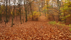 Autumn fall park forest landscape steadicam 4K. Stock Footage