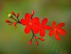 Exotic Tropical Flower - stock illustration