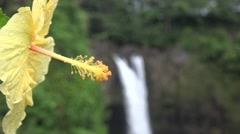 Rainbow Falls and hibiscus flower, Hawaii Stock Footage
