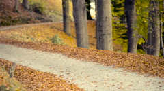 Running at park in autumn Stock Footage