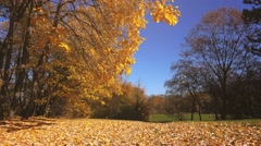 Shedding autumn leaves falling in park Stock Footage