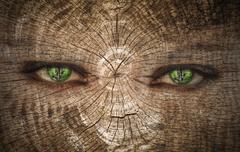 Green human eye on a wood Stock Photos