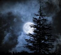 Magic landscape with pine tree  under dramatic cloudy sky at full moon Stock Photos