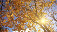 Under the deciduous autumn treetop - stock footage