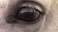 Horse Eye Stock Footage