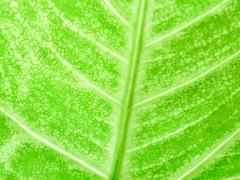 Detail of Green leaf texture background Stock Photos