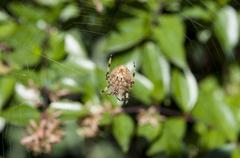 Garden spider on the web Stock Photos