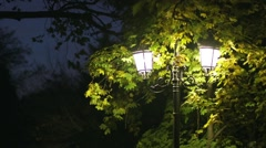 Street lamp lit tree surrounded by autumn Stock Footage