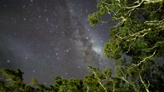 Milky Way Above Tree Tops, Milford Sound. Pan Down - stock footage