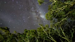 Milky Way Above Tree Tops, Milford Sound. Pan Up Stock Footage