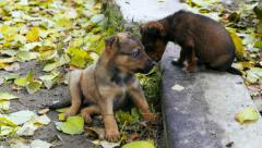 Homeless puppies of stray dogs. Struggle for survival,  protection of animals Stock Footage