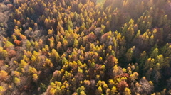 Flying over woodlands in autumn Stock Footage